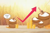 국제 밀 가격 2014년 이후 최고 수준 기록